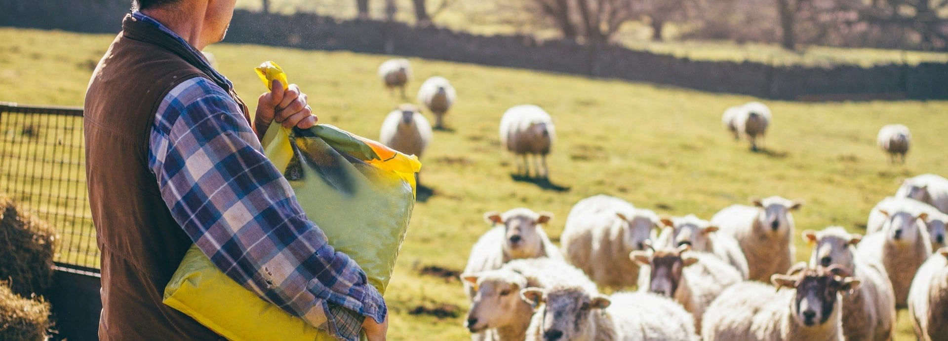We All Need a Shepherd
